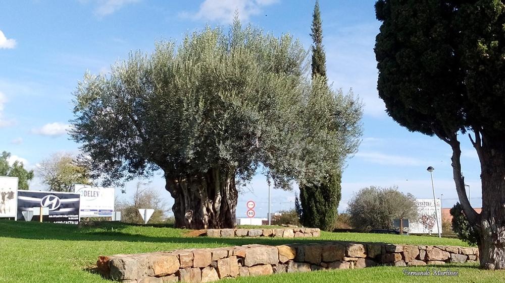 olivera-5