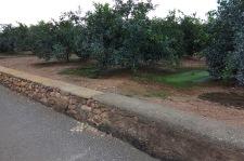 Mur delimitador camí-horta al camí Senda de Vinambròs