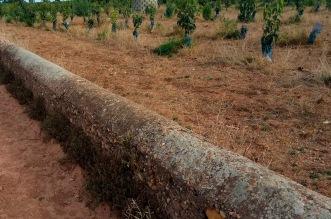 Muret delimitador d'hortes limítrofs